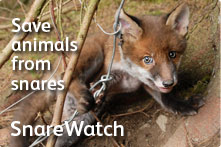 Save animals from snares